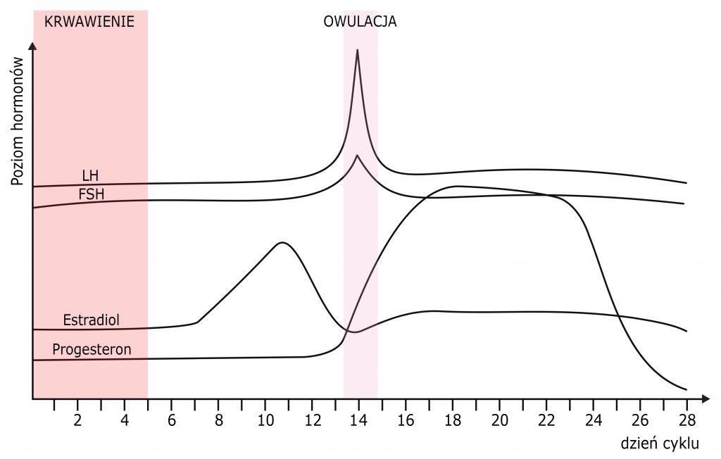 Wykresy LH, LSH, Estriadiol, Progesteron, 2 tydzień ciąży