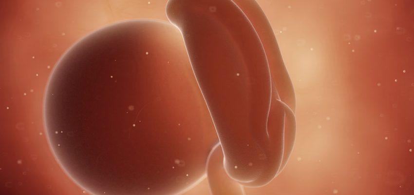 4 tydzień ciąży, kalendarz ciąży, implementacja zarodka