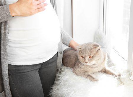 toksoplazmoza w ciąży, kot a ciąża, leczenie toksoplazmozy, ryzyko toksoplazmozy, choroba od kota w ciąży